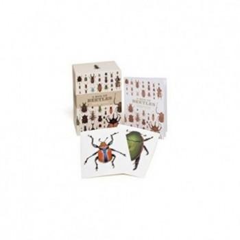 A Box of Beetles: 100...